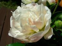2007syakuyaku1