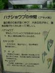 Jsyokubutu1