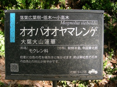 Ooyamarenge1