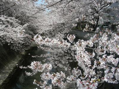 Kandagawa1