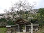 Asakurasakura2
