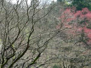Harueiheiji