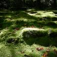 静かな苔の世界