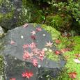 石の上に散り紅葉