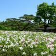 つつじが咲く庭園