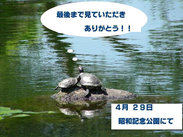 池のカメさん