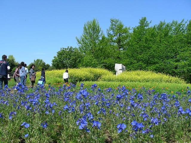 青と黄色の世界